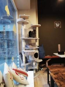 Cat Cafè Gatto in Tazza